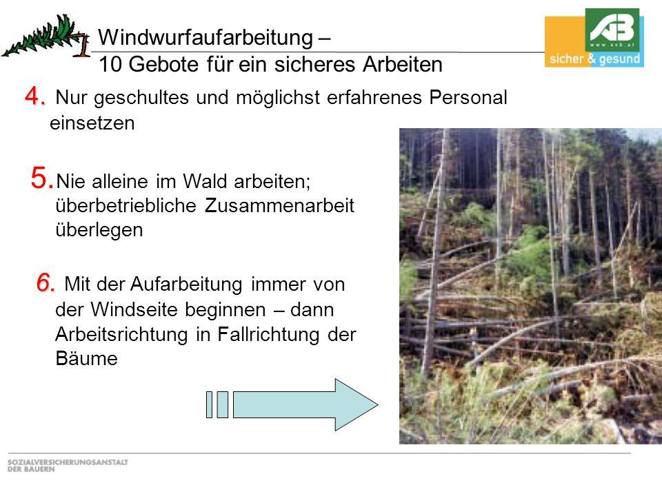Windwurfaufarbeitung – 10 Gebote für ein sicheres Arbeiten