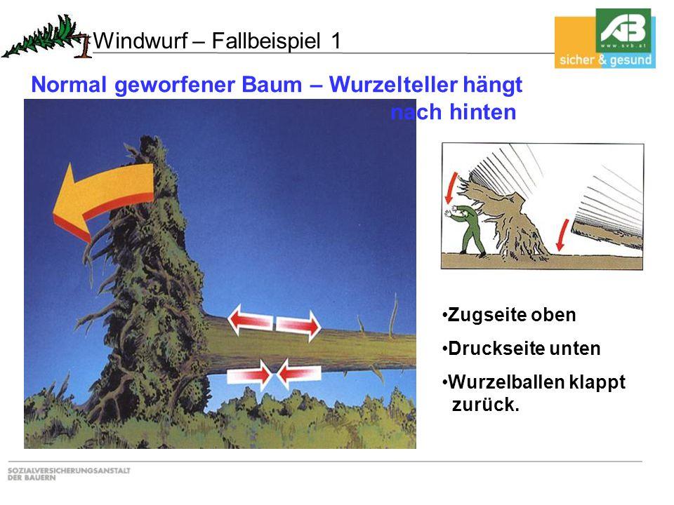 Windwurf – Fallbeispiel 1