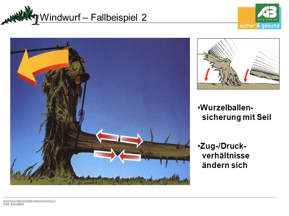 Windwurf – Fallbeispiel 2