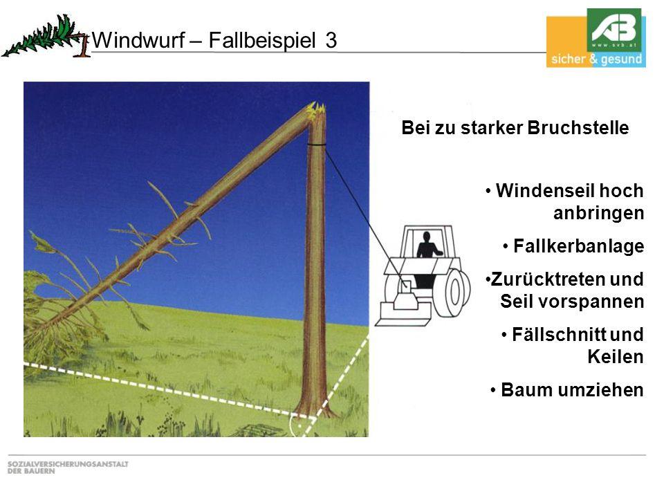 Windwurf – Fallbeispiel 3