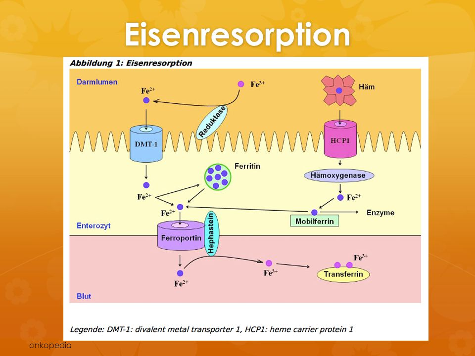 Eisenresorption onkopedia