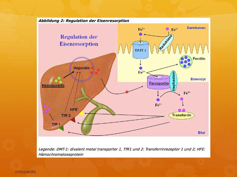 Eine zentrale Rolle bei der Regulation der Eisenaufnahme aus der Nahrung spielt ein in der Leber gebildetes Peptidhormon, das Hepcidin. Hepcidin reduziert durch Herabregulierung des DMT-1 die Eisenaufnahme in die Enterozyten und bremst durch Internalisierung und Degradation des Eisenkanals Ferroportin 1 die Eisenfreisetzung aus den Enterozyten ins portale Blut. Bei einem Eisenmangel, einer Anämie oder Hypoxie wird die Hepcidinproduktion in der Leber vermindert, um die Eisenaufnahme im Darm zu steigern.