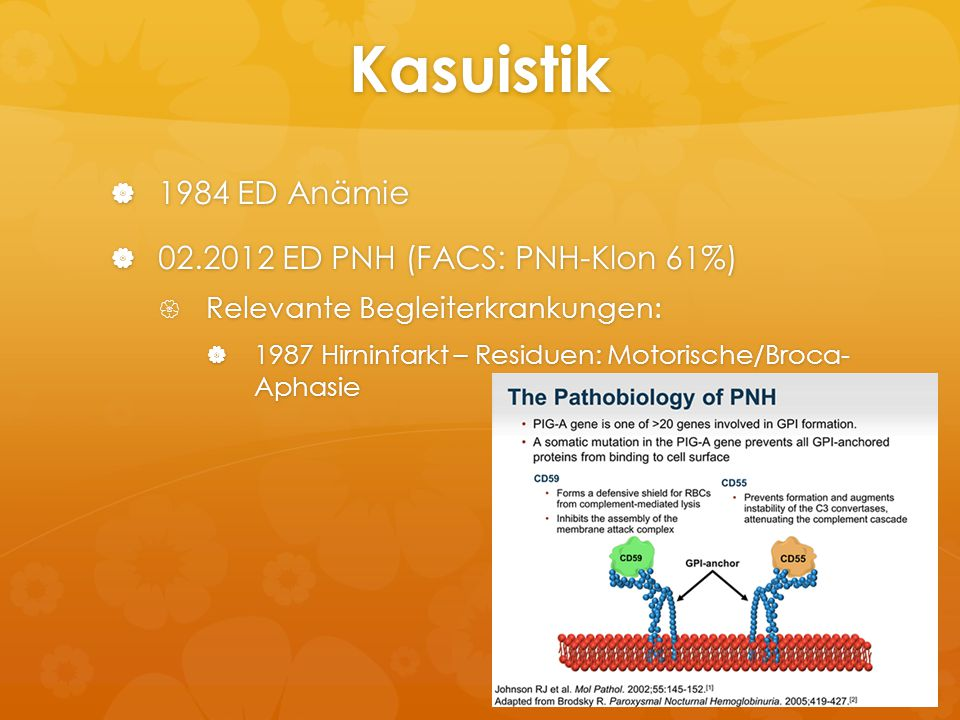 Kasuistik 1984 ED Anämie 02.2012 ED PNH (FACS: PNH-Klon 61%)