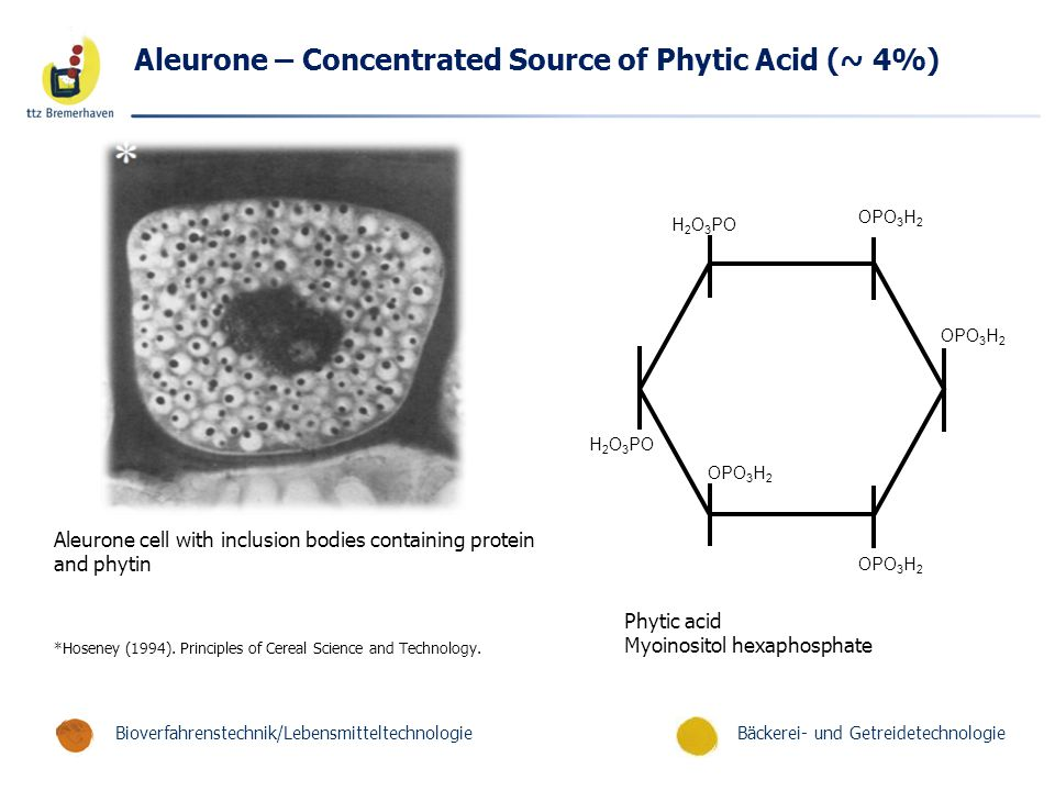Aleurone – Concentrated Source of Phytic Acid (~ 4%)
