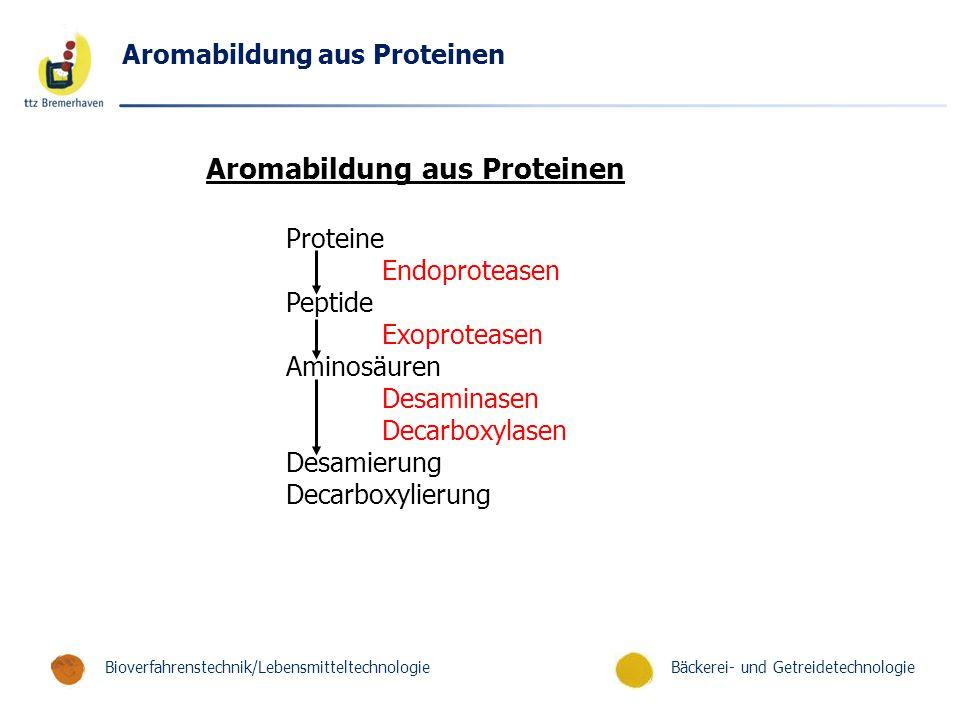 Aromabildung aus Proteinen