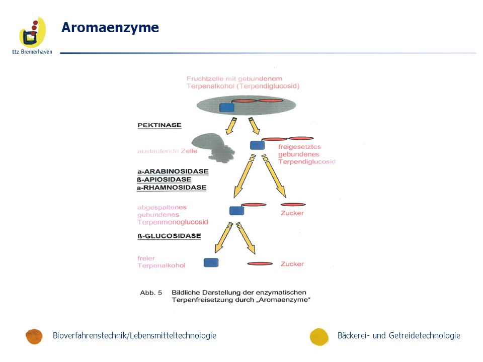 Aromaenzyme