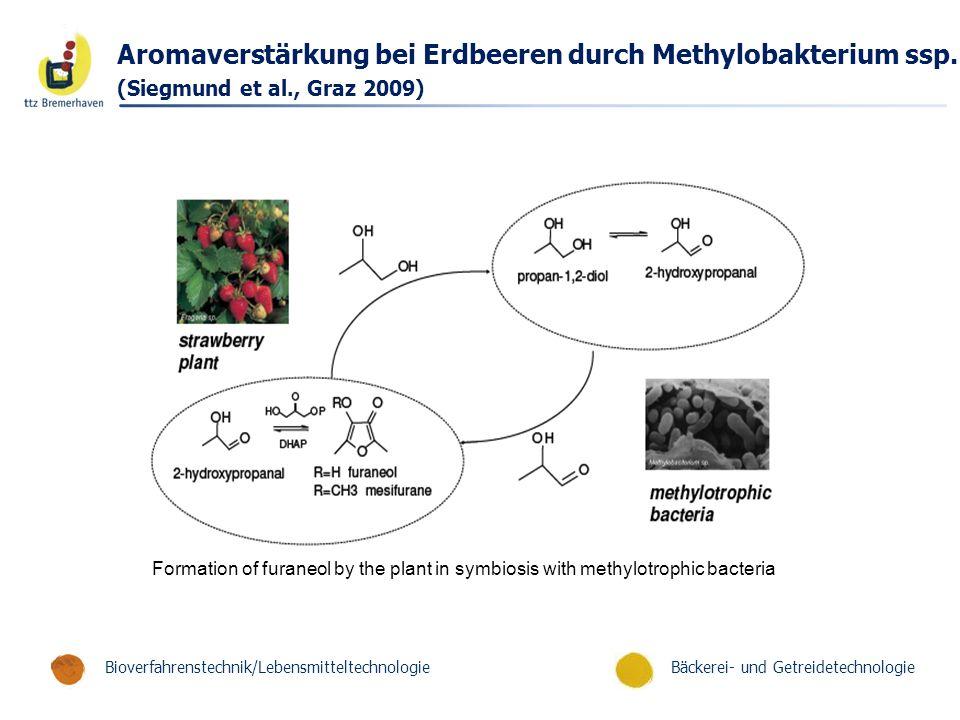 Aromaverstärkung bei Erdbeeren durch Methylobakterium ssp.