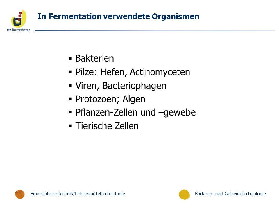 Pilze: Hefen, Actinomyceten Viren, Bacteriophagen Protozoen; Algen