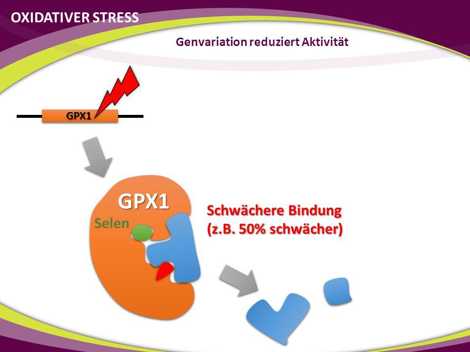 Genvariation reduziert Aktivität