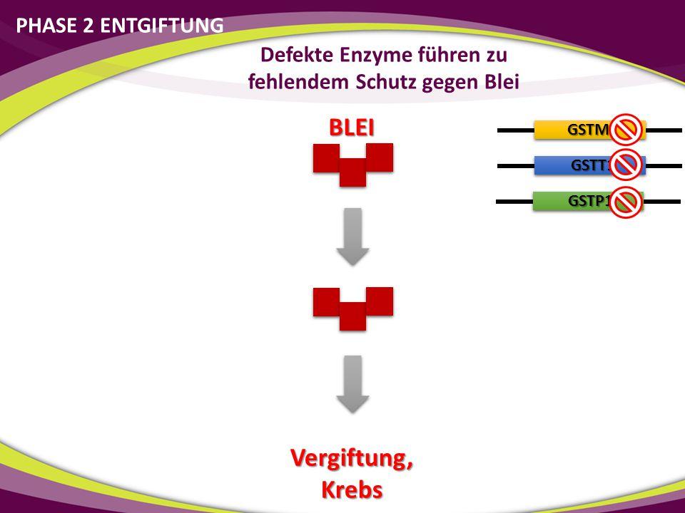 Defekte Enzyme führen zu fehlendem Schutz gegen Blei