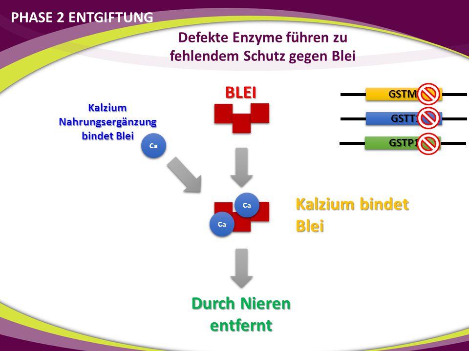 BLEI Durch Nieren entfernt