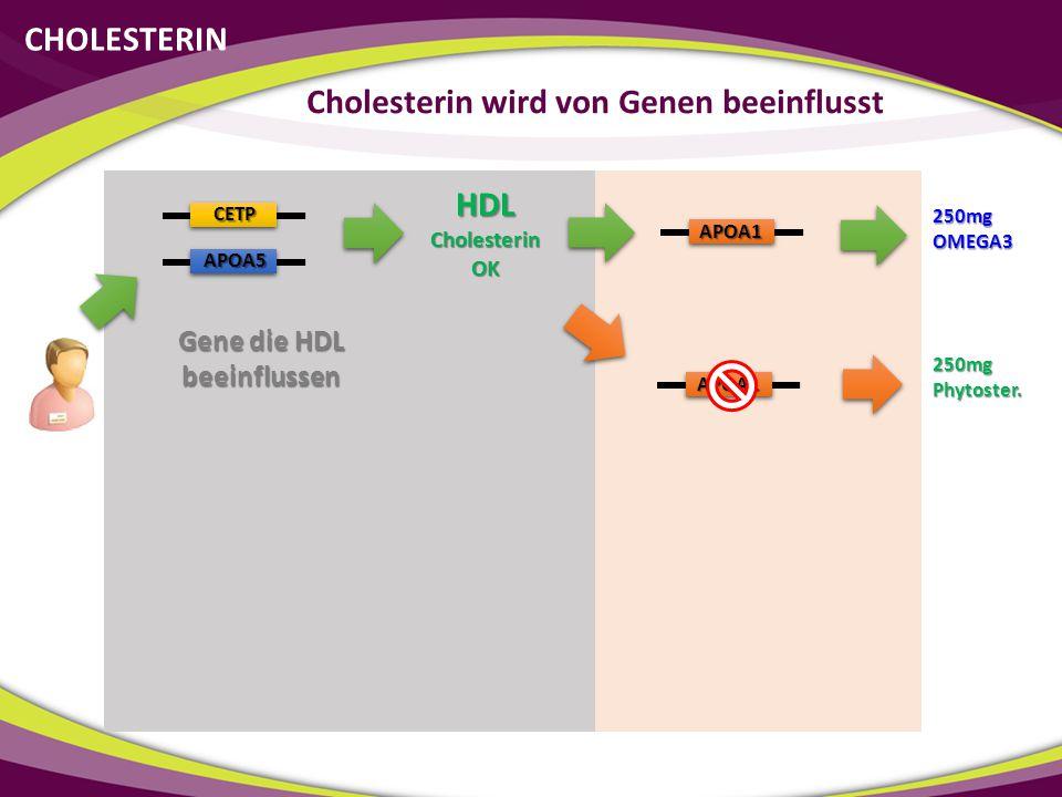 Cholesterin wird von Genen beeinflusst Gene die HDL beeinflussen