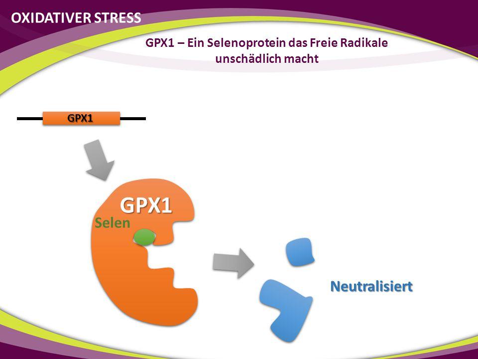 GPX1 – Ein Selenoprotein das Freie Radikale unschädlich macht