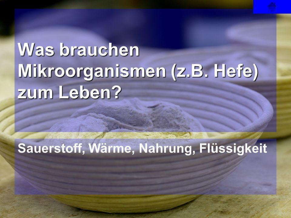 Was brauchen Mikroorganismen (z.B. Hefe) zum Leben