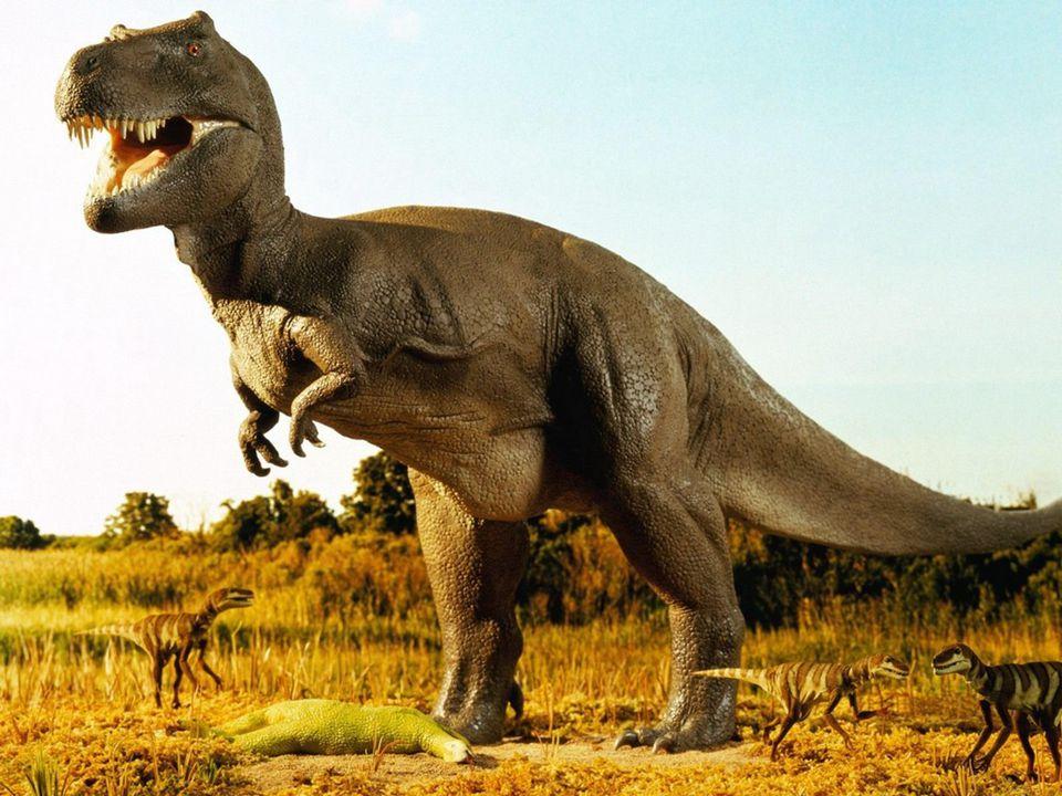 Das Warenhaus – ein vom aussterben bedrohter Dinosaurier