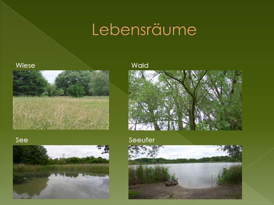 Lebensräume Wiese Wald See Seeufer