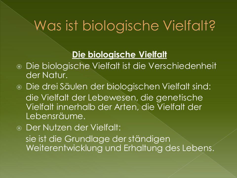 Was ist biologische Vielfalt