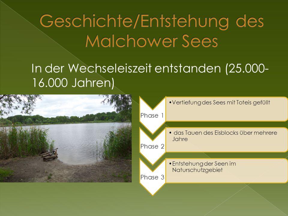 Geschichte/Entstehung des Malchower Sees