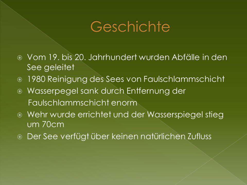 Geschichte Vom 19. bis 20. Jahrhundert wurden Abfälle in den See geleitet. 1980 Reinigung des Sees von Faulschlammschicht.