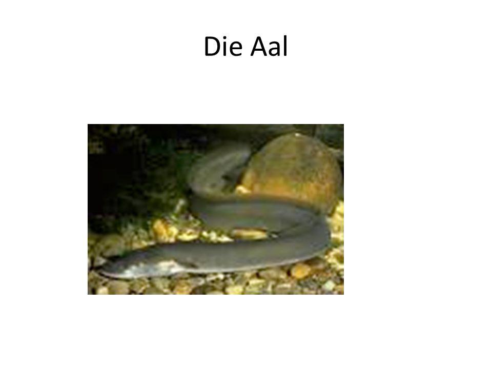 Die Aal