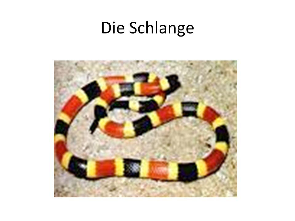 Die Schlange