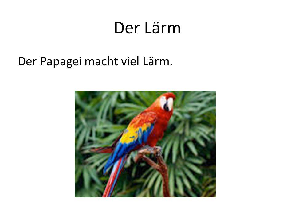 Der Lärm Der Papagei macht viel Lärm.