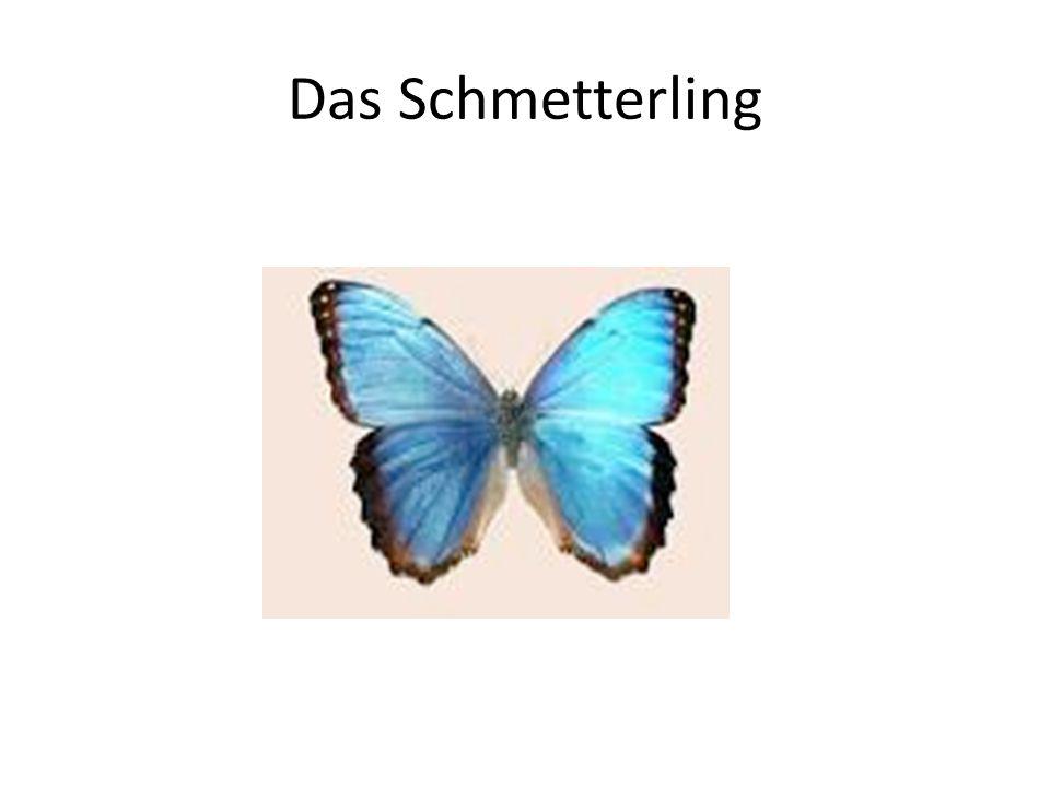 Das Schmetterling