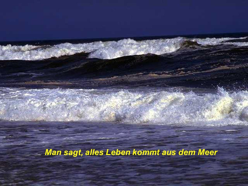 Man sagt, alles Leben kommt aus dem Meer