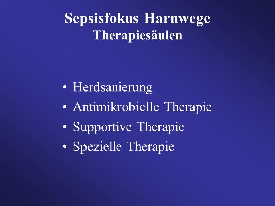 Sepsisfokus Harnwege Therapiesäulen