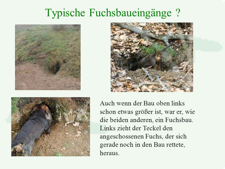 Typische Fuchsbaueingänge