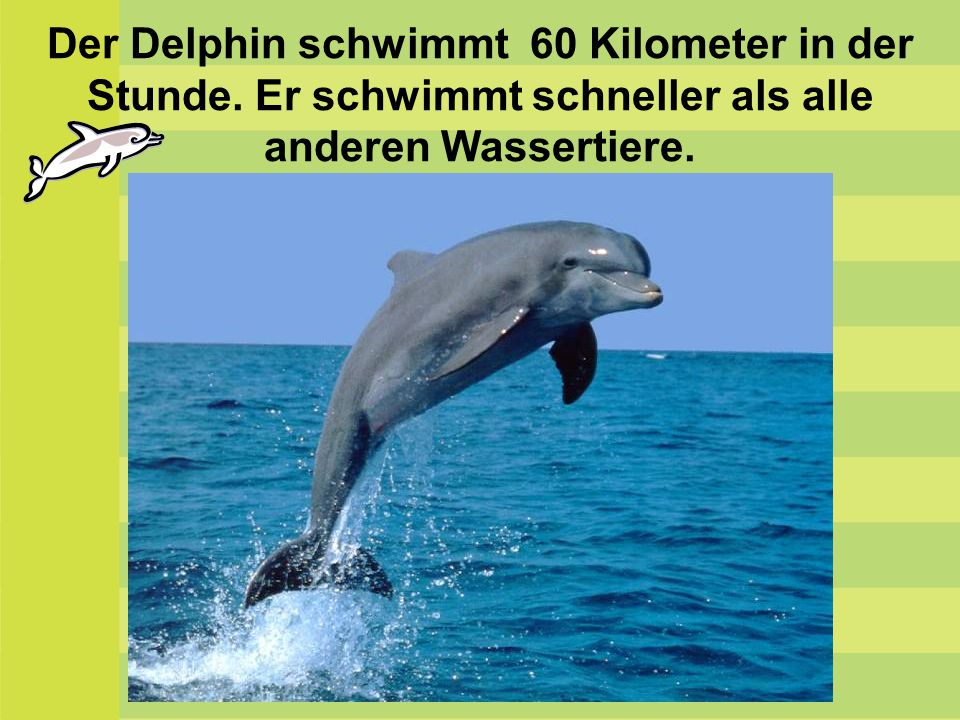 Der Delphin schwimmt 60 Kilometer in der Stunde