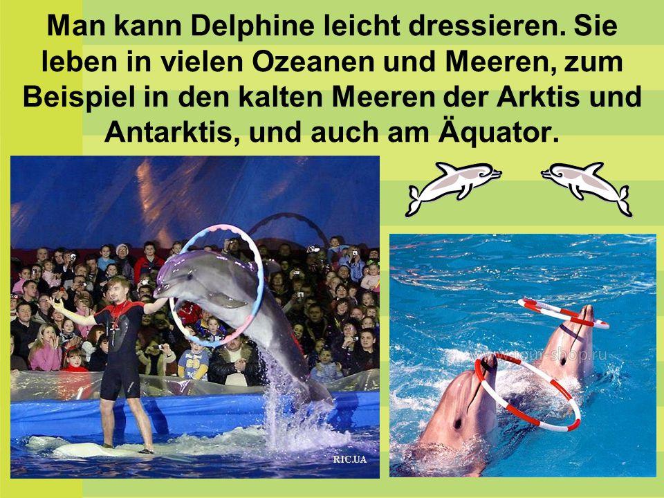 Man kann Delphine leicht dressieren