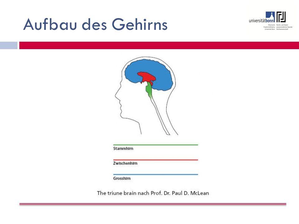 Aufbau des Gehirns