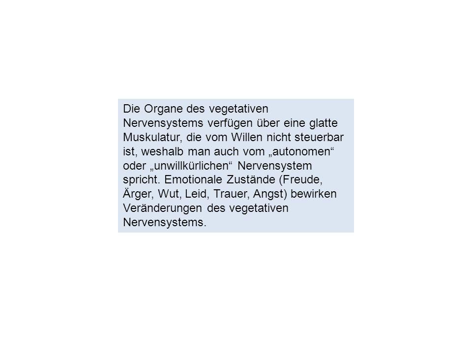 """Die Organe des vegetativen Nervensystems verfügen über eine glatte Muskulatur, die vom Willen nicht steuerbar ist, weshalb man auch vom """"autonomen oder """"unwillkürlichen Nervensystem spricht."""