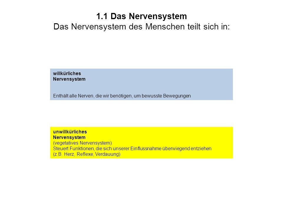 1.1 Das Nervensystem Das Nervensystem des Menschen teilt sich in: