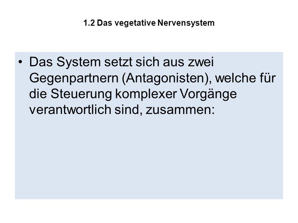 1.2 Das vegetative Nervensystem