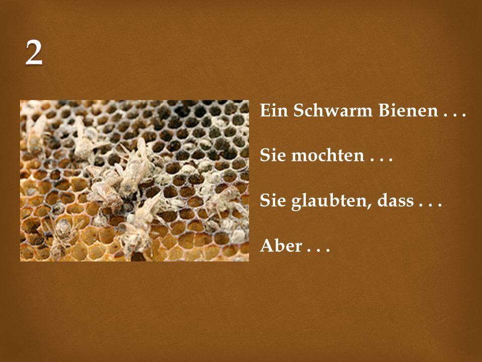 2 Ein Schwarm Bienen . . . Sie mochten . . . Sie glaubten, dass . . .