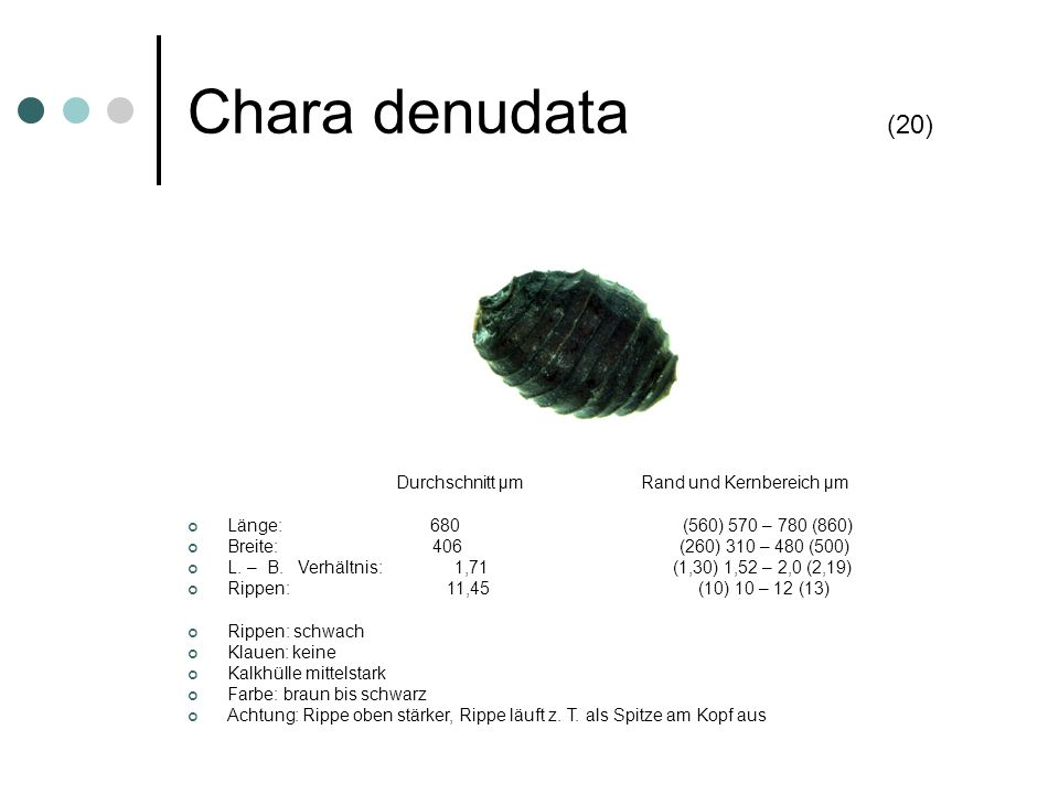 Chara denudata (20) Durchschnitt µm Rand und Kernbereich µm