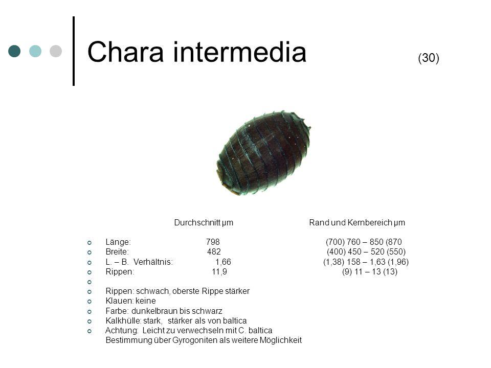 Chara intermedia (30) Länge: 798 (700) 760 – 850 (870