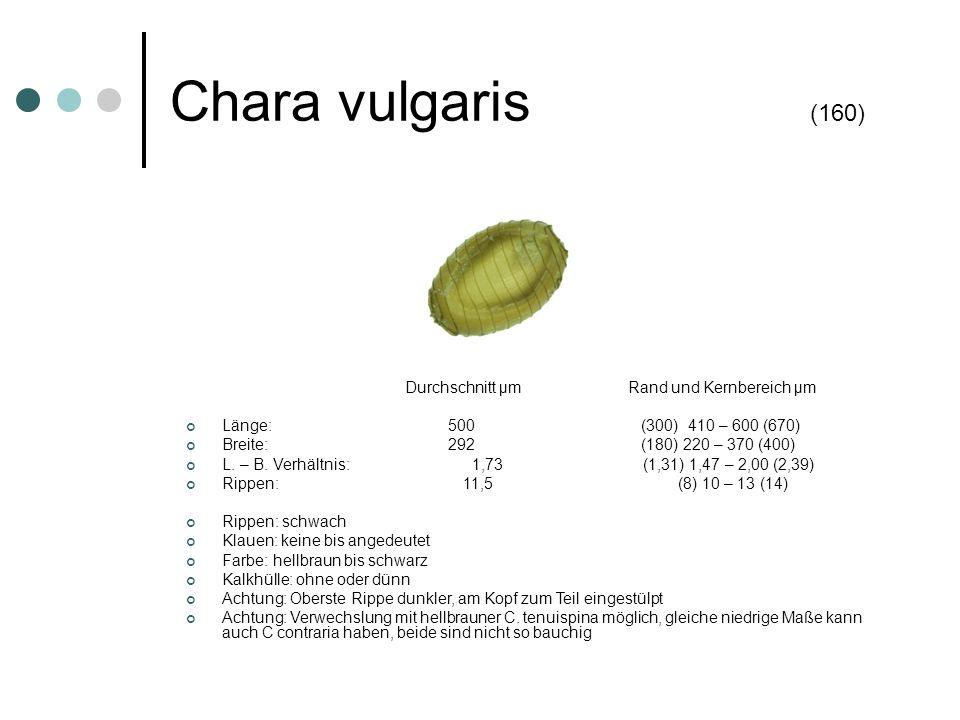 Chara vulgaris (160) Länge: 500 (300) 410 – 600 (670)