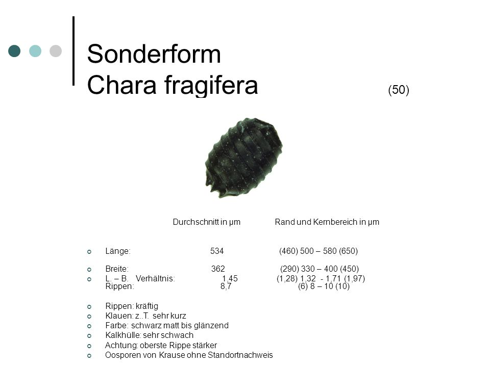 Sonderform Chara fragifera (50)