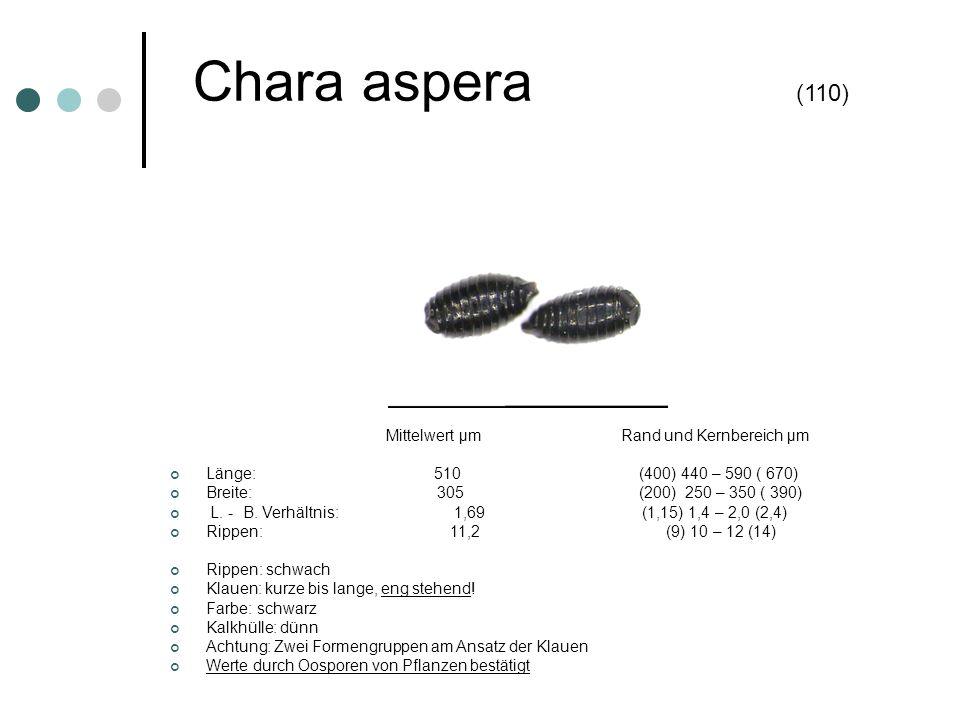Chara aspera (110) Mittelwert µm Rand und Kernbereich µm