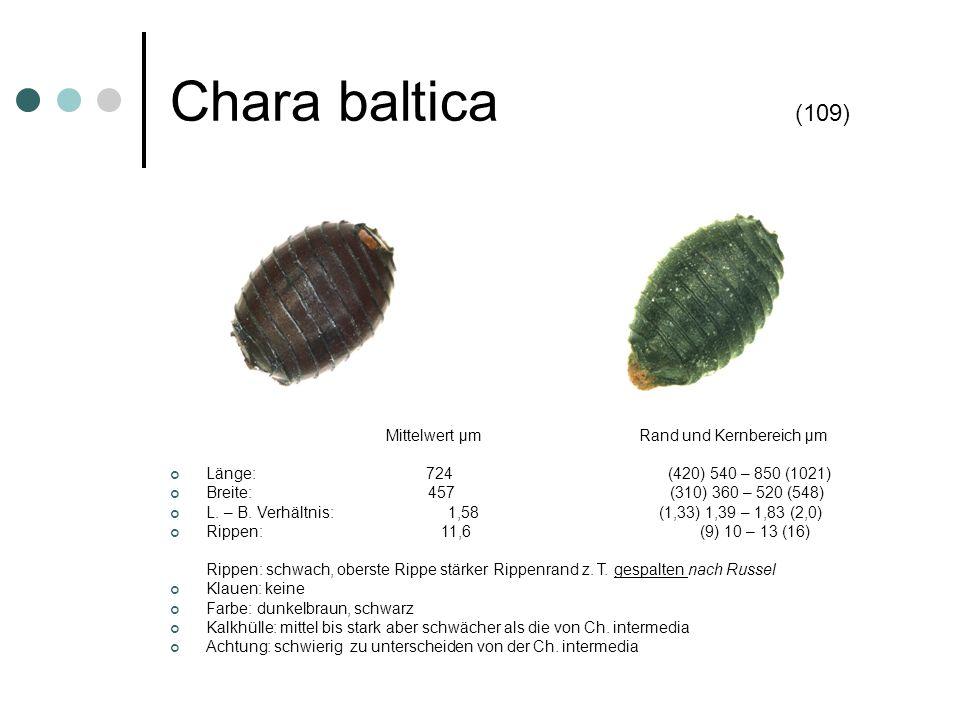 Chara baltica (109) Mittelwert µm Rand und Kernbereich µm