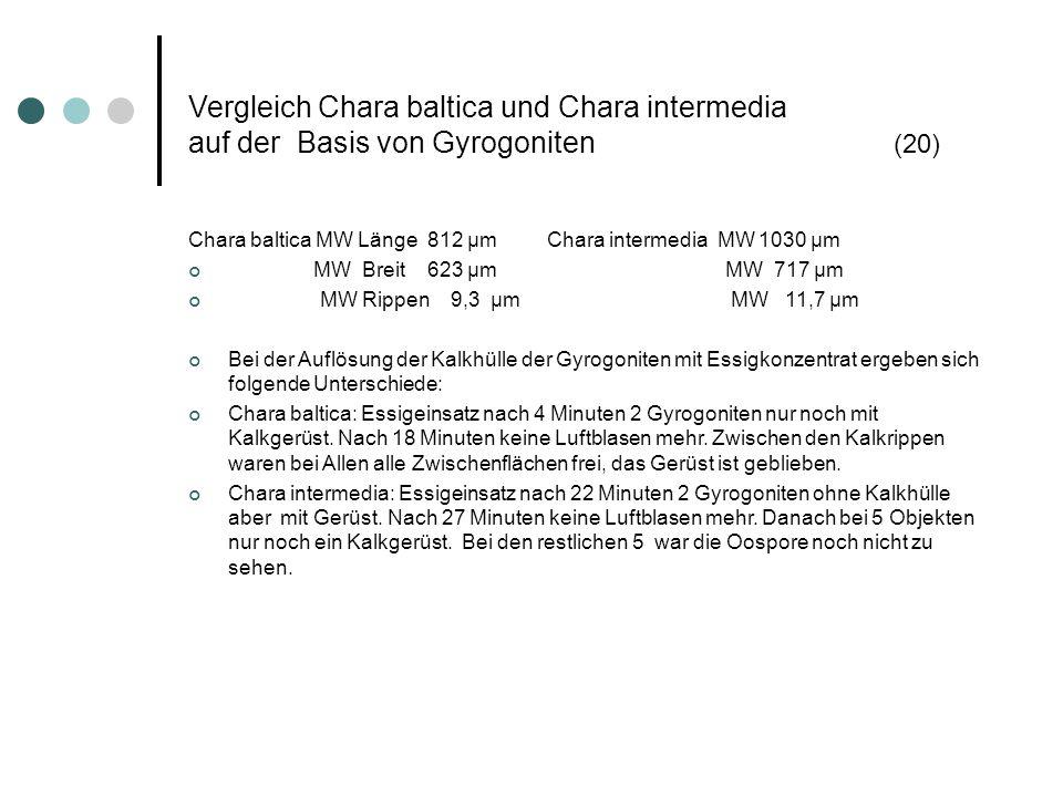 Vergleich Chara baltica und Chara intermedia auf der Basis von Gyrogoniten (20)