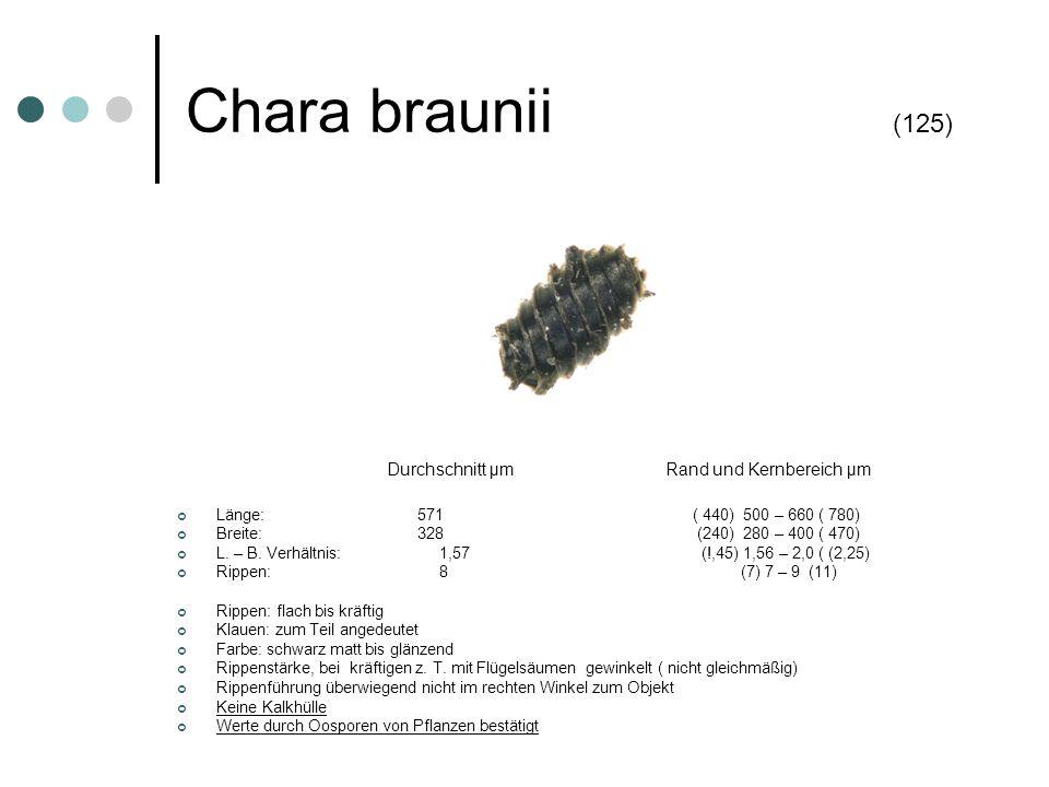 Chara braunii (125) Länge: 571 ( 440) 500 – 660 ( 780)