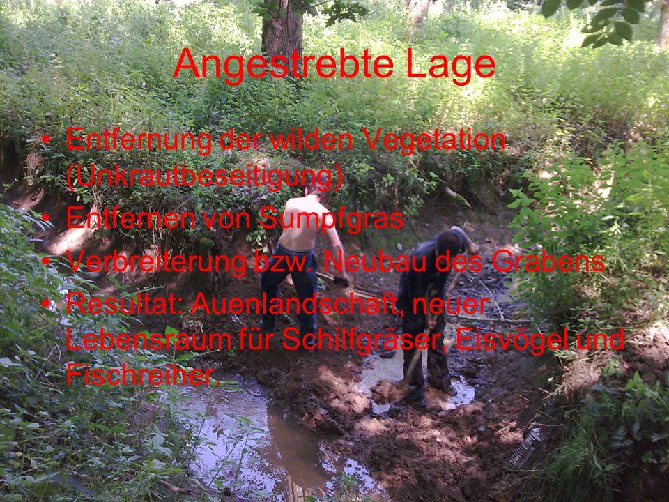 Angestrebte Lage Entfernung der wilden Vegetation (Unkrautbeseitigung)