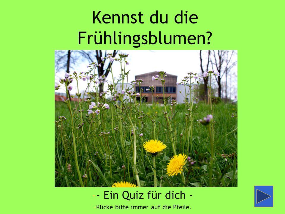 Kennst du die Frühlingsblumen