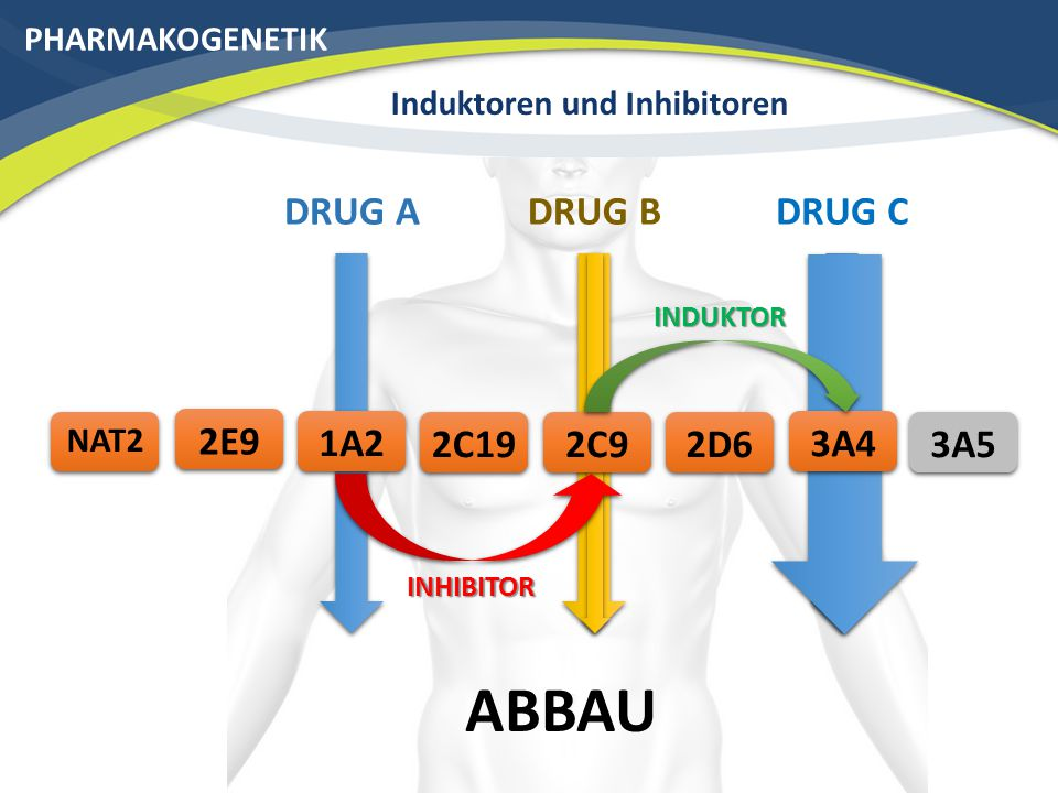 Induktoren und Inhibitoren