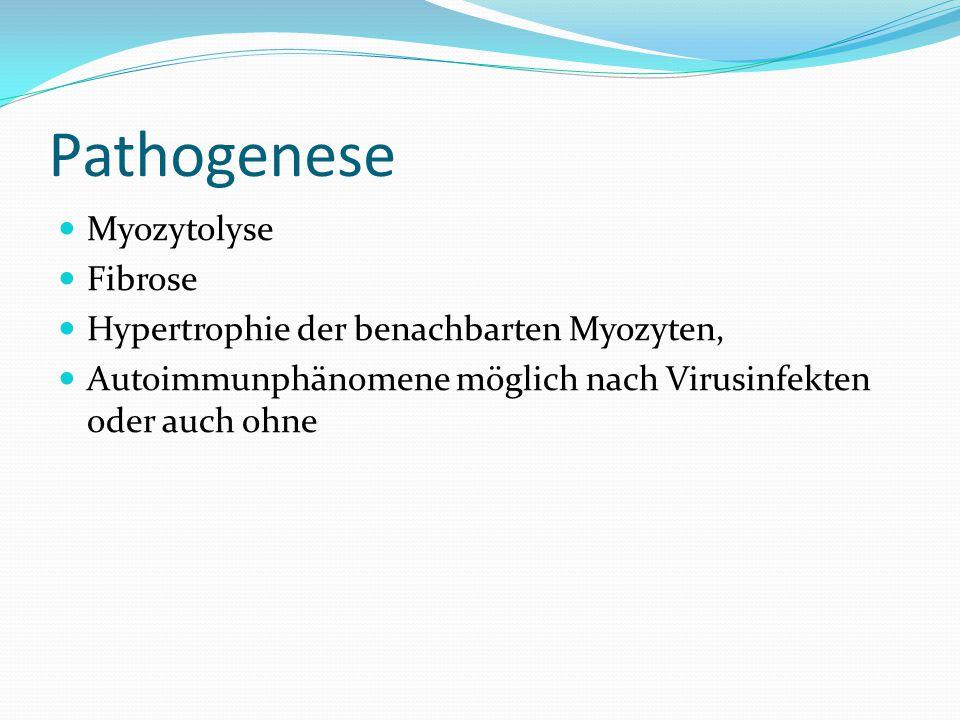 Pathogenese Myozytolyse Fibrose