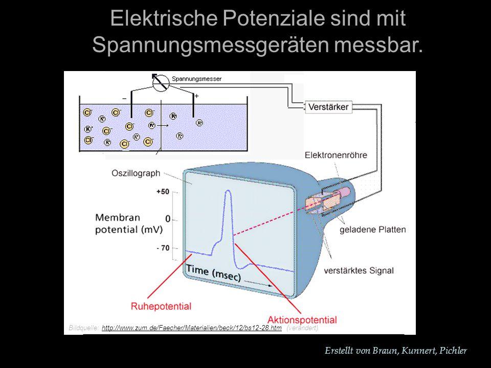 Elektrische Potenziale sind mit Spannungsmessgeräten messbar.